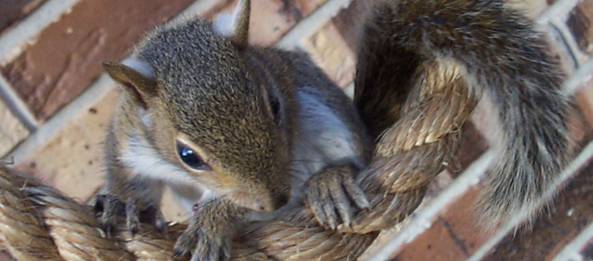 How To Get Squirrels Out Of The Chimney