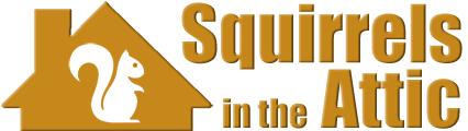 squirrelattic.com
